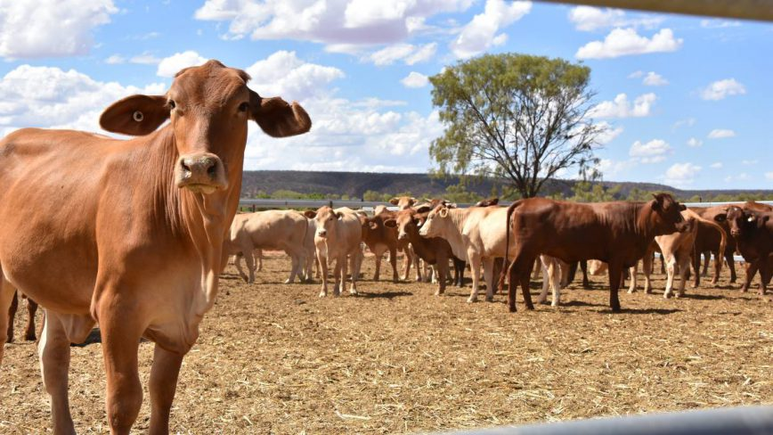 What is livestock financing and how can it be used?